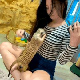Meerkat: what is this??