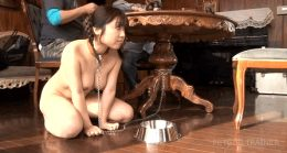 Obedient pet sat at her owners table